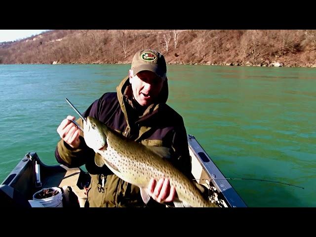 big brown niagara river