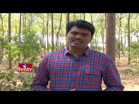 Malabar Neem Farming Information Guidee | Sandalwood (Sri ga
