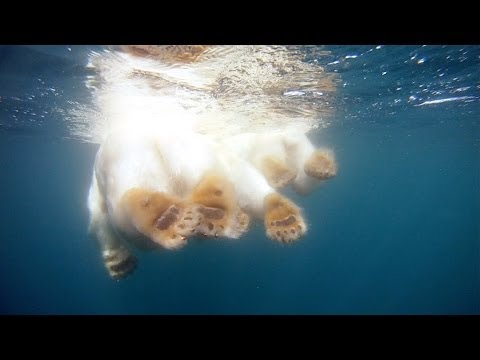 GoPro: Polar Bears - The Quest for Sea Ice