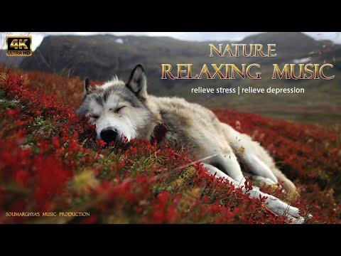 😪 Relaxing Sleep