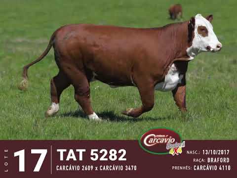LOTE 17   TAT 5282