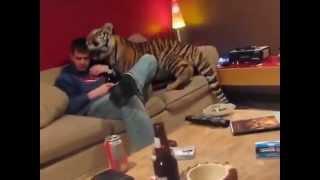Tiger zum Kuscheln