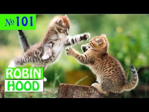 ПРИКОЛЫ 2017 с животными. Смешные Коты, Собаки, Попугаи // Funny Dogs Cats Compilation. Май №101