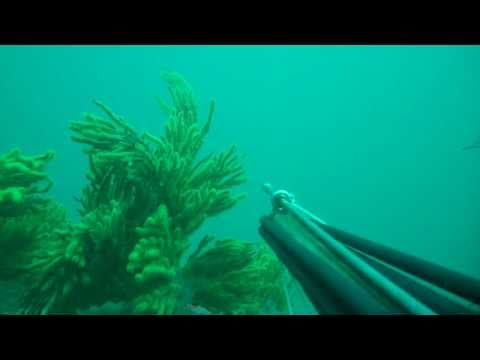 Spearfishing in the Santa Monica Bay