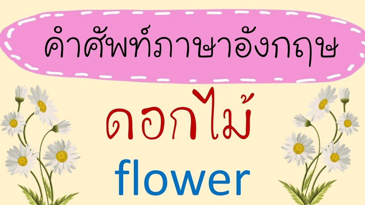 คำศัพท์ดอกไม้ ภาษาอังกฤษ Flower