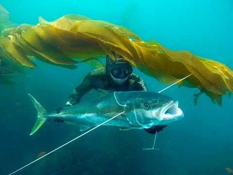 Blue Water Spearfishing in Baja.m4v