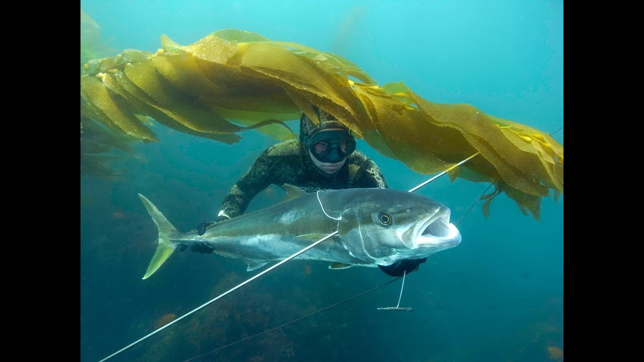bajamexico - Spearfishing is Not a Crime