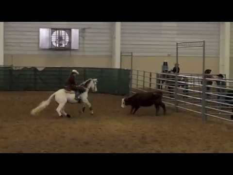MSU Ranch Horse Team: 2014 Collegiate Championship Highlights