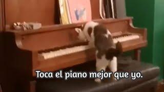 Mi michi sabe tocar el piano.