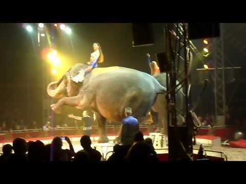Circus show | Amazing Circus Shaolin and Elephant Art