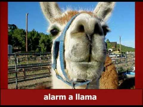 blackbooker: Llama llama duck!!!! https://t.co/1mvo6OMMpQ #MagentoImagine #Payback @sherrierohde @JoshuaSWarren