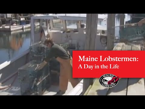 Maine Lobster: A