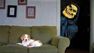 Funny Cats and Dogs 2021 - Dog and Cat Memes Compilation #42