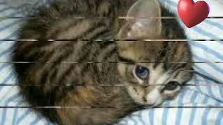 Милые котята разных пород!