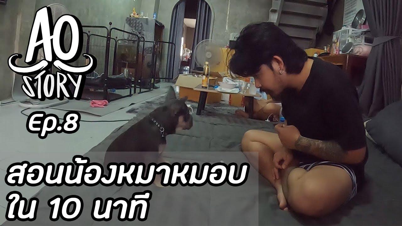 AO STORY EP.8 : สอนน้องหมาหมอบใน 10 นาที