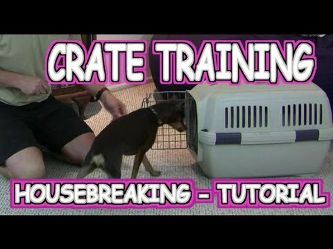 Crate Training a Puppy / Housebreaking - Tutorial