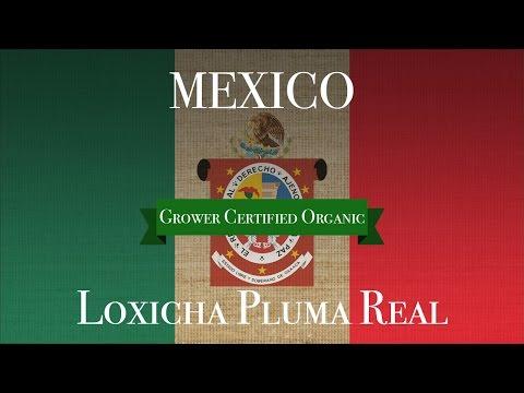 Mexico Organic Loxicha Pluma Real