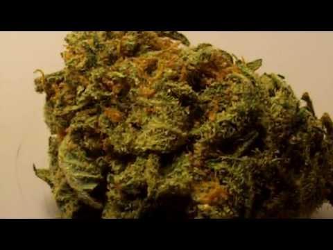 Ep 346 BC Rockstar Strain Review Hd 1080p BC Bud Depot Seeds medical marijuana weed