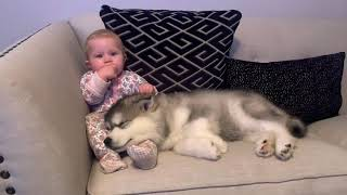The Best Year Of Our Lives! Baby And Puppy Growing Up Together! (Cutest Ever!!)