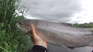 How to catch an atlantic salmon up streaming a flying C