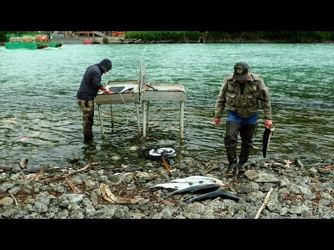 Combat fishing on Alaska's Kenai Peninsula