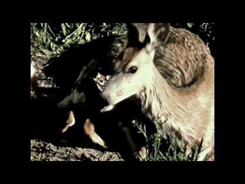Yellowstone: America's Eden (Full Movie)
