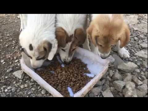 Stray Dogs Feeding
