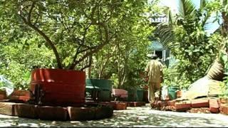 Urban Leaves: community farms in Mumbai