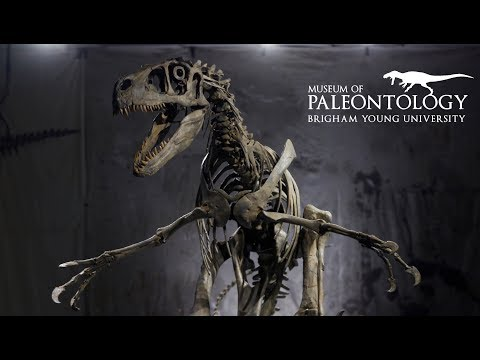 Utahraptor at the BYU Museum of Paleontology