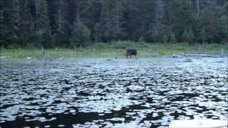 Algonquin Park Canoe Trip - Casey Lake/Misty Lake - July 20-22, 2014