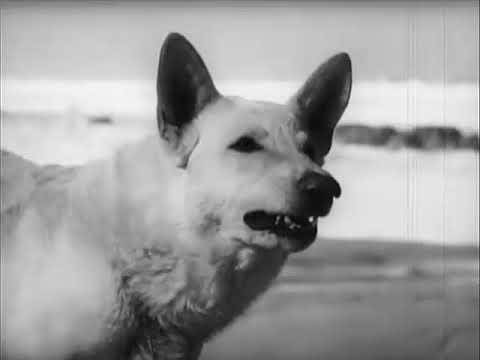 Film Noir Mystery Suspense Movie - The Second Woman (1950)