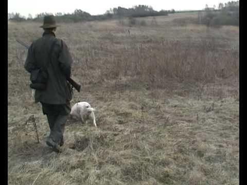 Охота со Спаниелем