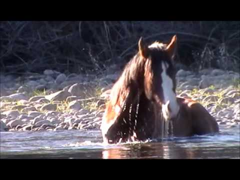 Salt River Wild Horses, mare and stallion