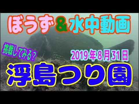 ぼうず&水中動画(2019年8月31日)in 浮島つり園