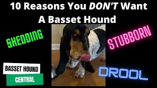 Basset Hound | 10 Reasons You DON'T Want a Basset Hound
