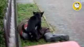 Los mejores videos de humor y risa divertidos, mas graciosos del mundo YouTube 2013 Animales salidos