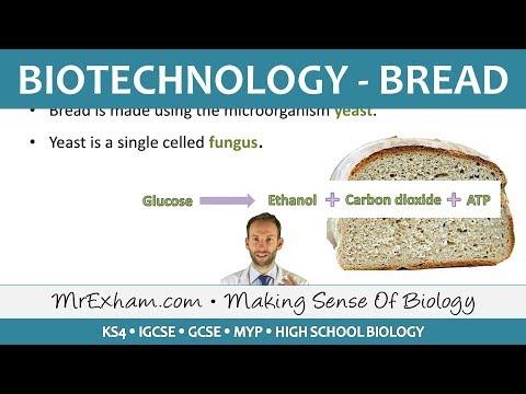Food Production - Biotechnology - Bread - GCSE Biology (9-1)