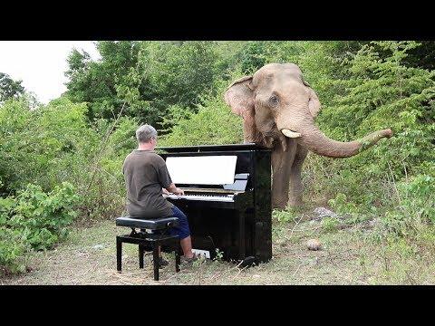 "Mahler ""Adagietto"" 5th Symph. on Piano for Bull Elephant"