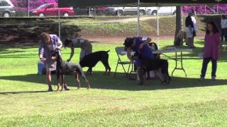10/28/12 Working Dog Club Of Hawaii - Doberman Pinschers.m4v