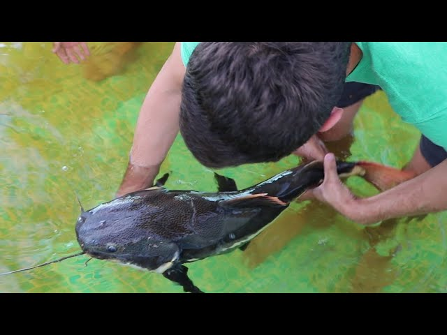 CATCHING Multiple GIANT EXOTIC CATFISH IN (SECTET POND)