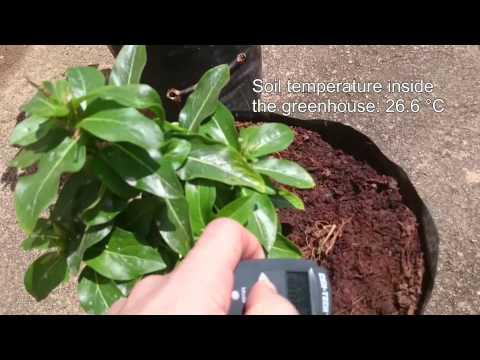 Temperature comparisons of leaf, soil and plastic bag in Bangalore, India