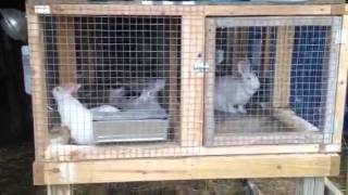 Rabbit Barn