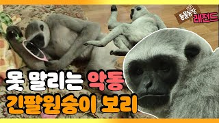 [TV 동물농장 레전드] 가정집에서 키우는 '긴팔원숭이 보리' 풀버전 다시보기 I TV동물농장 (Animal…