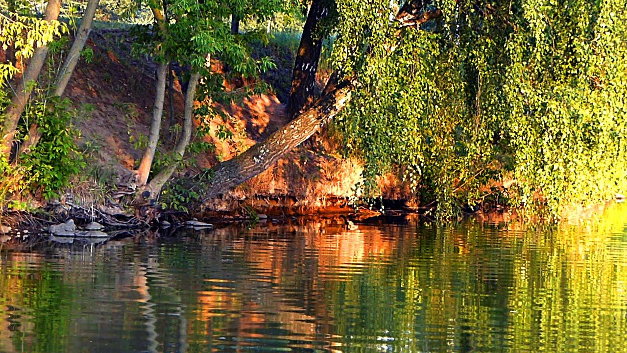 Деревья У Воды. Красивые Летние Пейзажи. Футажи Лето ...