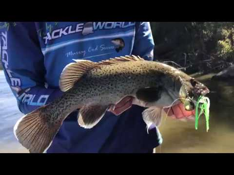 The Search for Golden Perch - Yellowbelly Fishing