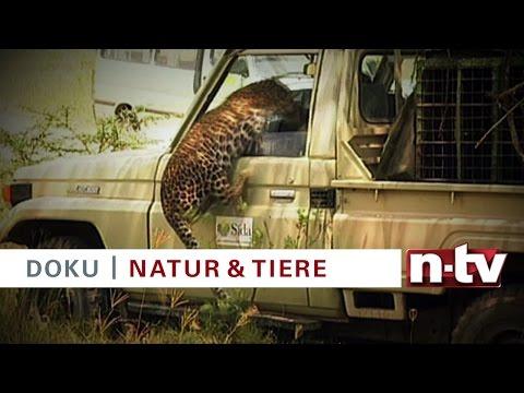 """Trailer n-tv Doku """"National Geographic: Wilde Tierwelt – Überraschungsangriffe"""" am 03.03.2016"""