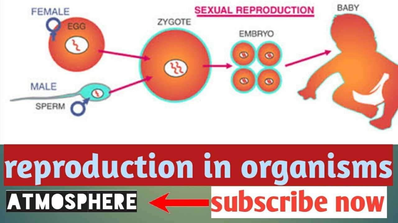 Reproductive pathways characterizing amphimixis