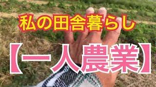 フォローしてね!家庭菜園菜園でも役立つ情報満載 Twitter @MzDYKHiQGvZFscT 小野寺農園 本気モード突入です。野菜栽培を中心に、一人農業、田舎暮らしをやって ...