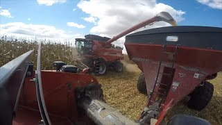 case ih 8240 combine   first day of harvest 2015