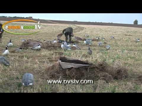 κυνήγι χήνας  στην Σουηδία